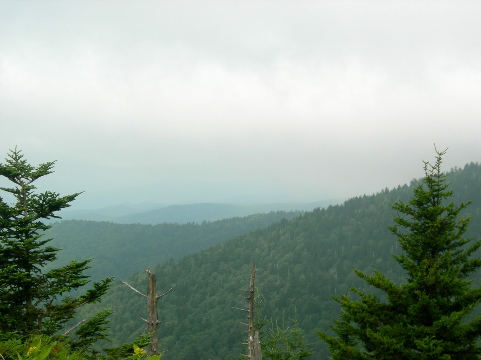 Views from New Found Gap Road - Smoky Mountains - Family Vacations