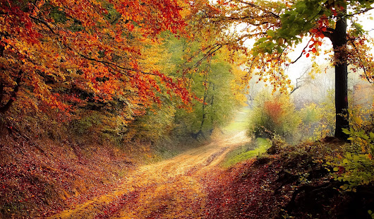 How To Celebrate the Autumn Equinox