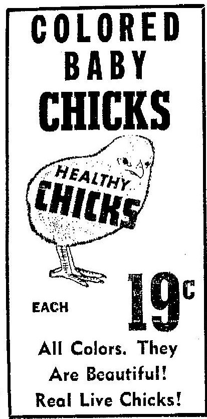 Vince Staten: Easter Chicks in the Fifties