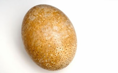 Protein Ditemukan Dalam Telur Burung Unta Prasejarah