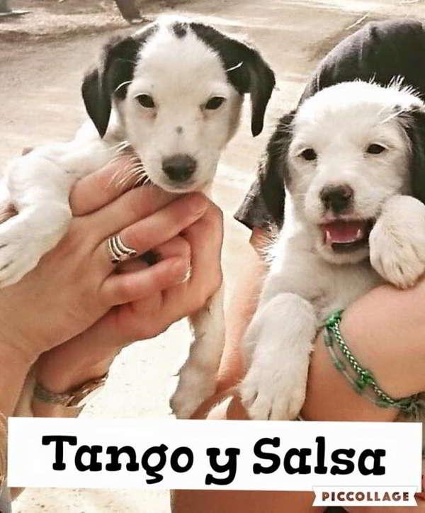 cachorros tamaño mediano