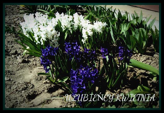 http://synergiaprzyjemnosci.blogspot.com/2017/05/ulubiency-kwietnia.html