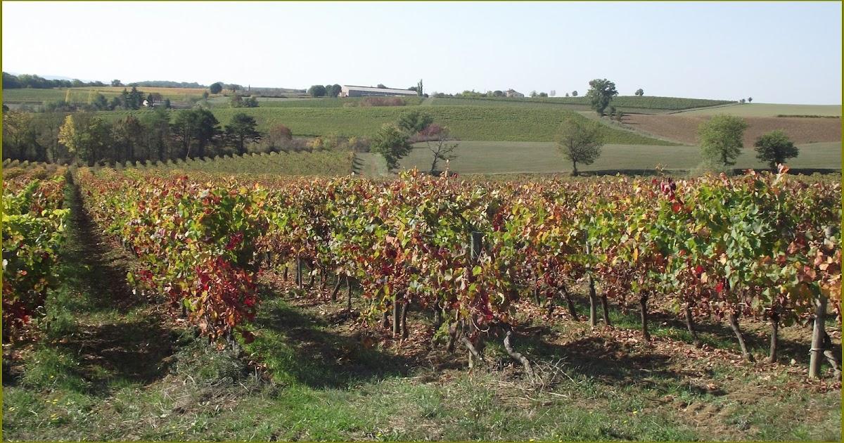 Pigeonnieresplendy2 couleurs d 39 automne - Peut on manger les olives piquees par la mouche ...