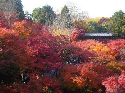 東福寺の紅葉 通天橋〔絶景〕