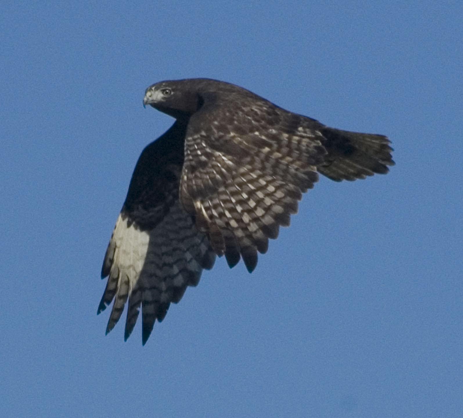 Sw Louisiana Birds A Few Recent Photos