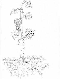 Taille de la vigne bio de table