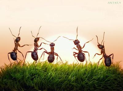 للتخلص من النمل والصراصير نهائيا بأستخدام أدوية بشرية بدون مبيدات حشرية
