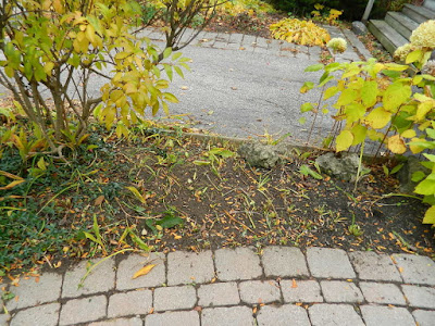 Paul Jung Gardening Services a Toronto Organic Gardener Fall Cleanup Front Yard in Lawrence and Yonge After