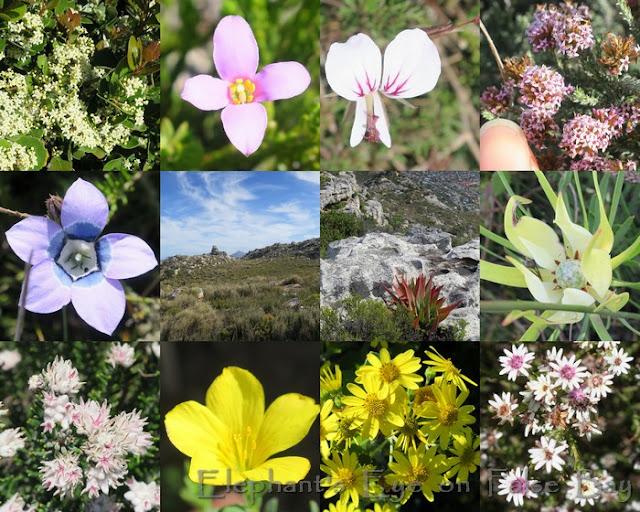Elsie's Peak April flowers