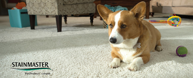 Carpet ready to stand up to busy homes - even homes with pets