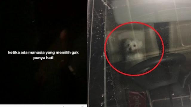 Tinggalkan Anjing di Mobil Selama 8 Jam Hingga Kehausan, Reaksi Pemilik Bikin Geram Netizen