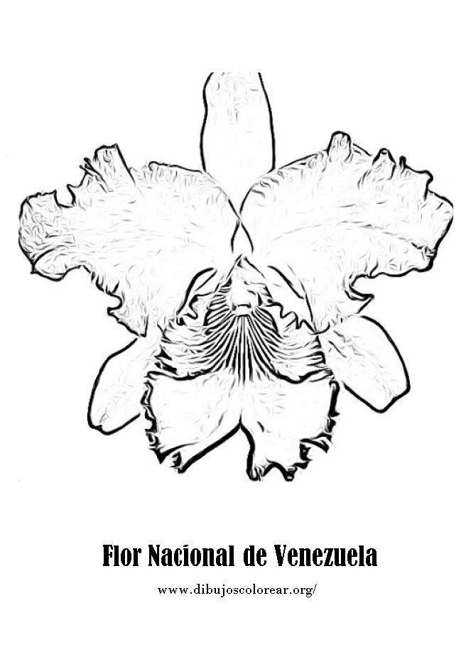 Dibujo De La Flor Nacional De Venezuela | orquidea venezolana para colorear