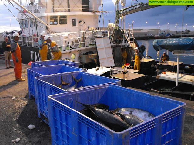Las gestiones del sector pesquero y del Gobierno canario culminan con la reapertura de la pesquería de atún blanco