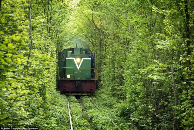 ormanda tren