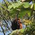 Dia 27 de maio é o Dia Nacional da Mata Atlântica e seu desmatamento é o menor desde 1985.