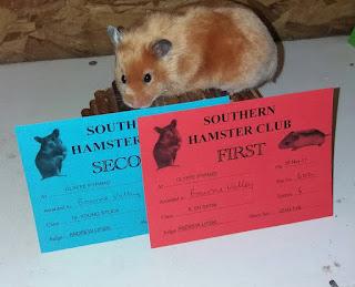 hamster satinado