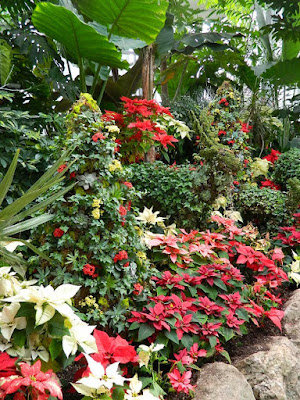 2018 Allan Gardens Conservatory Winter Flower Show massed poinsettias and succulent topiaries by garden muses--not another Toronto gardening blog