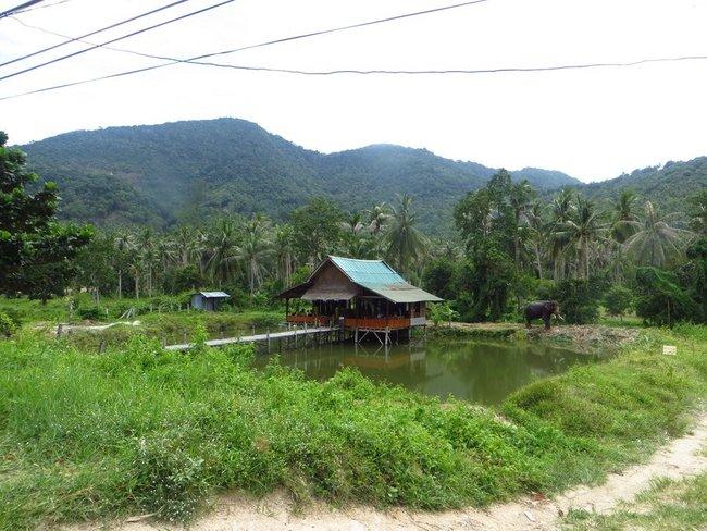 дом внутри острова, а рядом слон