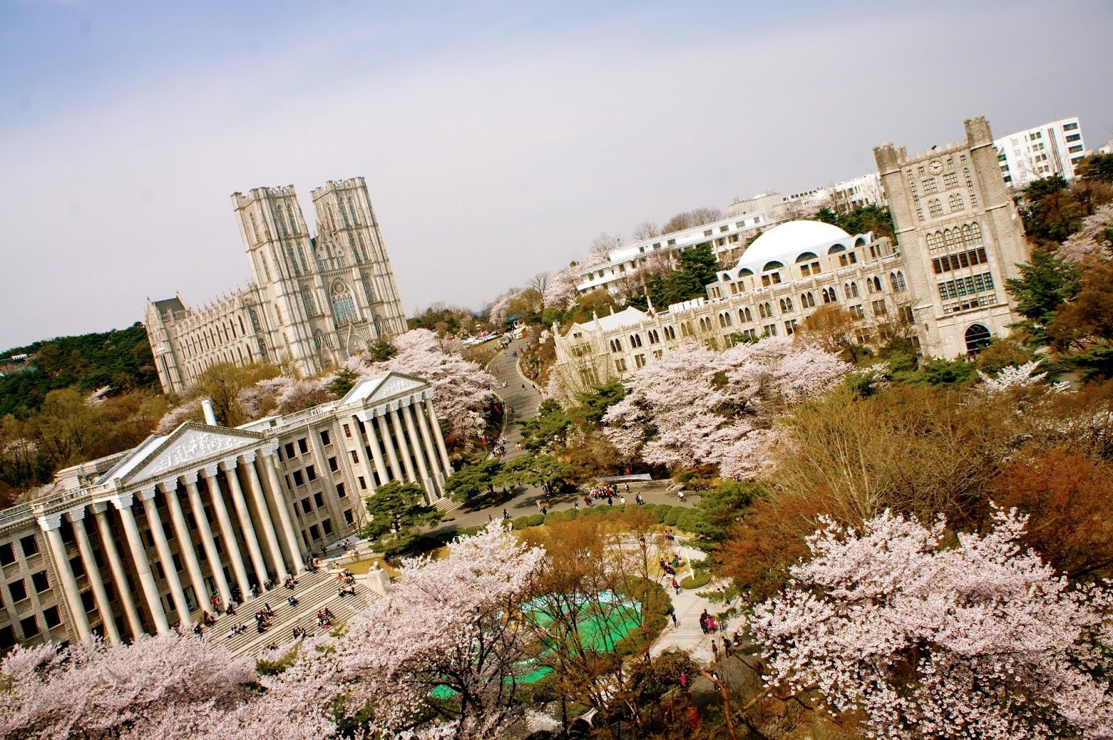 CHerry blossom Kyung Hee