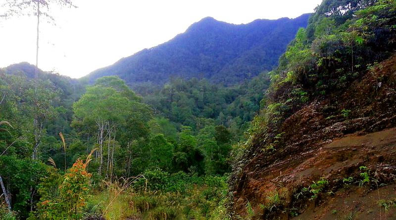 hutan memalukan Gunung Pagon - 1.850 mdpl (Brunei Darussalam)