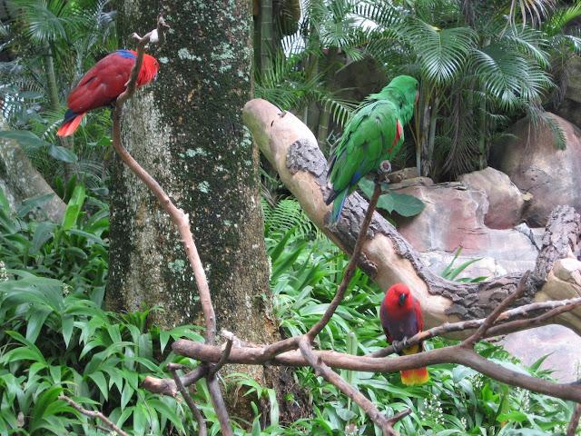 burung kakaktua taman safari prigen pasuruan