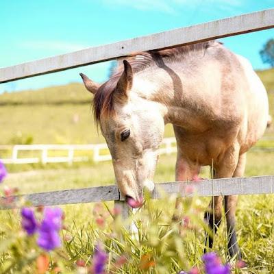 peternakan kuda di kebun madu efi