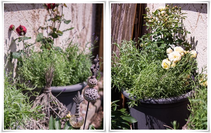 Blog + Fotografie by it's me! | fim.works | Bunt ist die Welt | Garten im Juni 2016 | vanillegelbe und dunkelrote Rose mit Lavendel im großen Topf | Gartenstecker