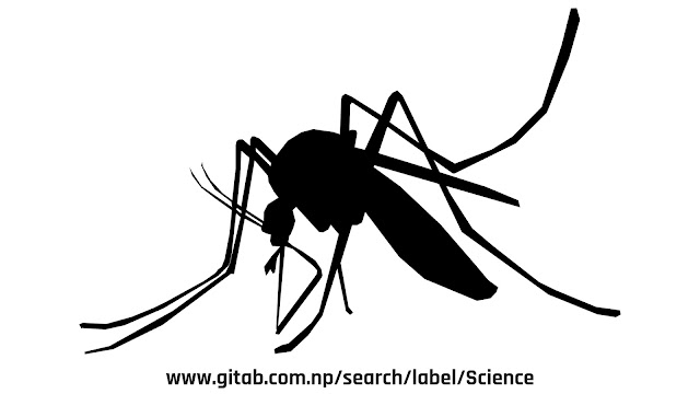 Mosquito Types and Diseases