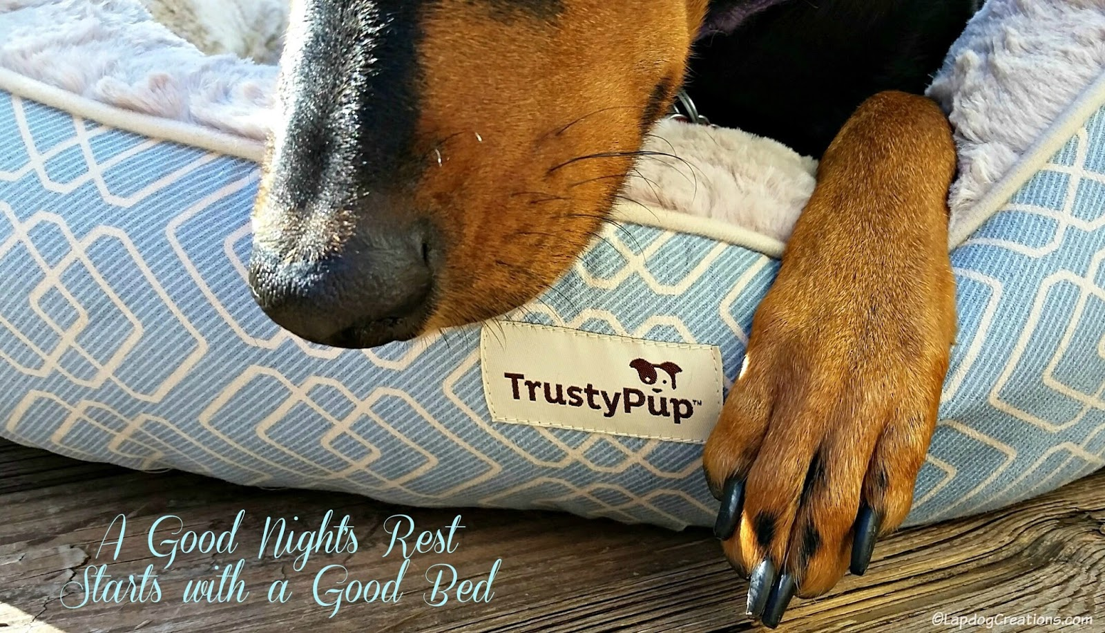 lapdog creations: your pup will rest easy with trustypup + giveaway