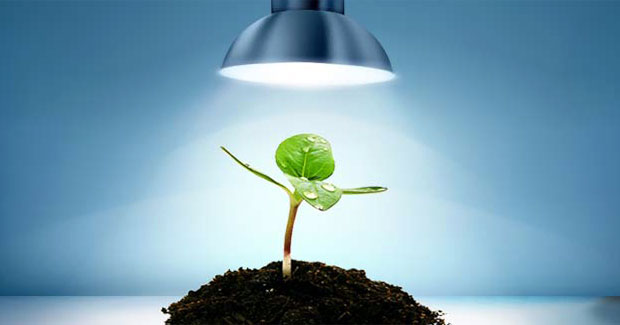 Best Lights for Growing Plants Indoors