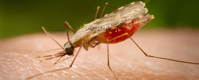 KANO STATE GOVT. APPROVES N48.5 MILLION FOR MALARIA CONTROL