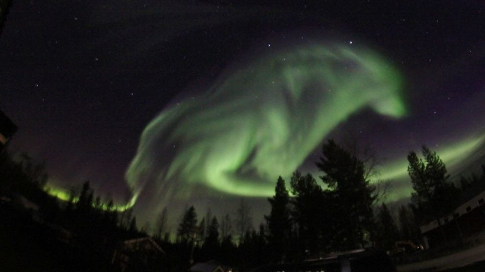 This Photographer Was Snapping The Northern Lights When Suddenly A Giant Wolf Appeared