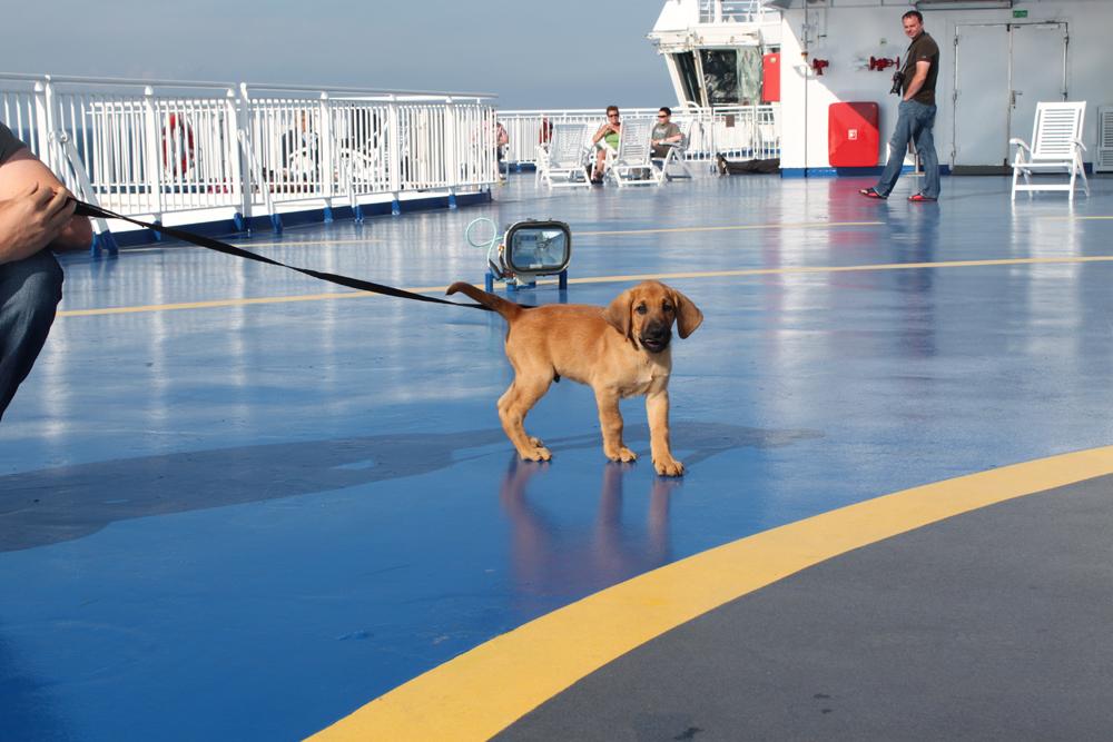 Koiranpennun hakumatkalla Tanskassa 21