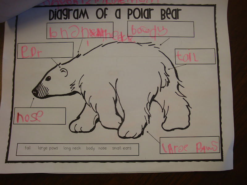 panda life cycle diagram ford ka wiring boot release text feature polar bears - great installation of