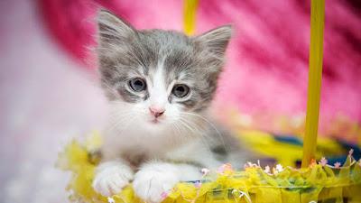 a-beautyful-cat-near-yellow-cloth-imagess