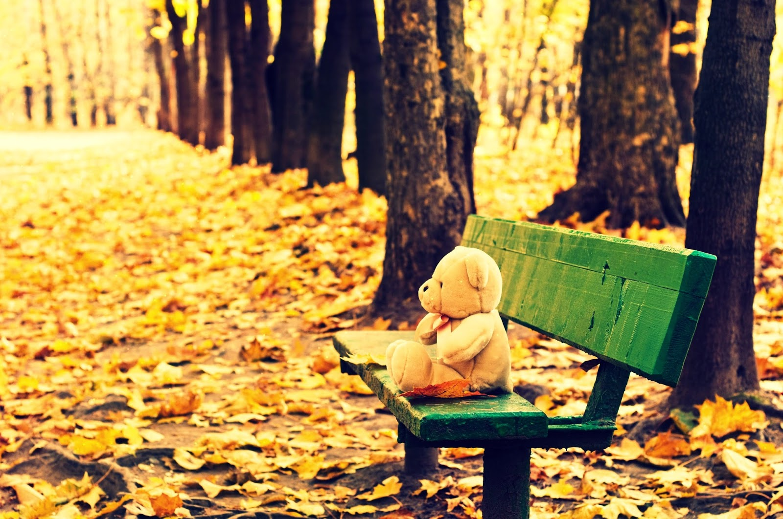 Cute-teddy-bear-feeling-alone-sitting-in-park-chair-3324x2208.jpg