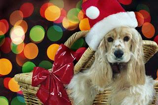 Τα ζώα δεν είναι δώρα...