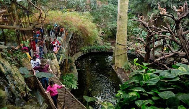 kemungkinan besar Anda pernah berkunjung ke satu atau dua kebun binatang 10 KEBUN BINATANG TERBAIK DI AMERIKA SERIKAT