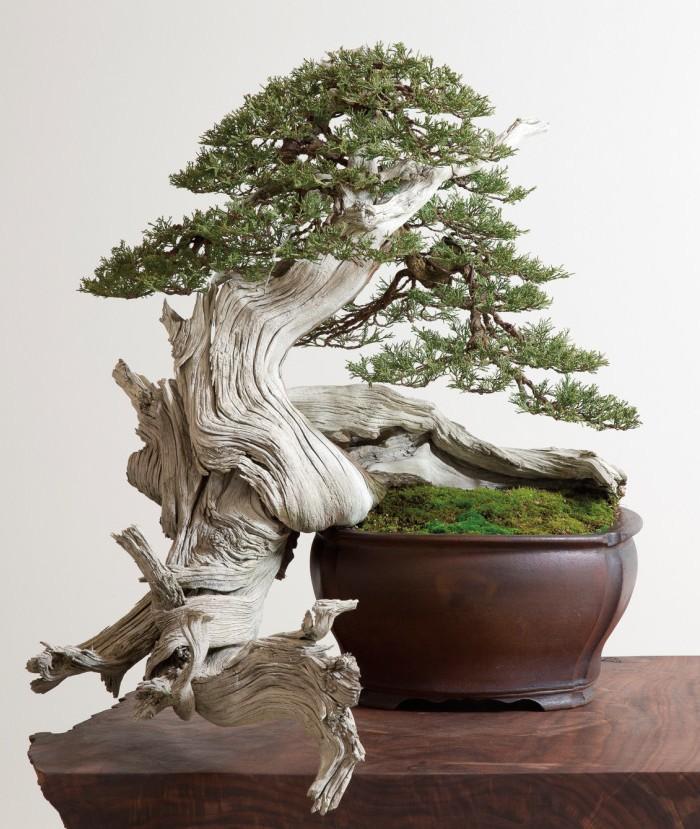 Nama Karakter Bonsai Jepang Bonsai Dari Kawat