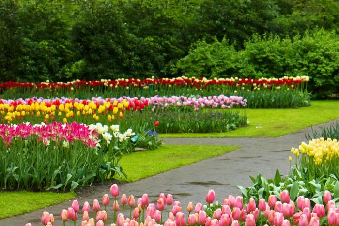 la floreciente edad de oro de keukenhof 2016 guia de jardin