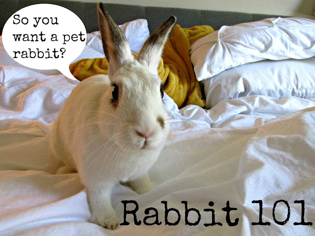 A Quick Guide to Having A Pet Rabbit