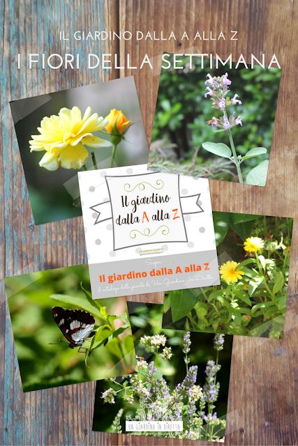 il giardino dalla A alla Z - i fiori della settimana - agosto
