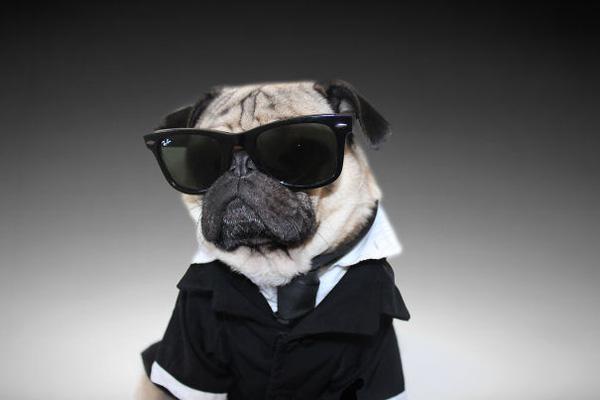 """Chùm ảnh chú cún """"cosplay"""" nổi tiếng trên Instagram"""