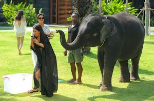 Kim Kardashian is scared to try 'selfie' with baby elephant