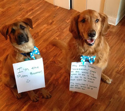 Funny Dog Shaming : Shame Shame