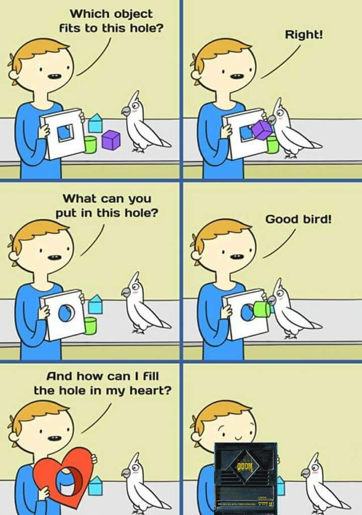 Calopsitas são aves muito inteligentes