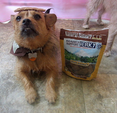 Jada balancing a piece of Natural Balance Immunity Support Jerky