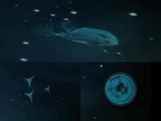 Zeroids living space creatures 2013 |UFO Sightings Hotspot