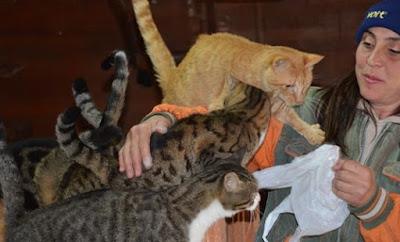 Silivri'de Evinde yüzlerce kedi ve köpekle yaşıyor