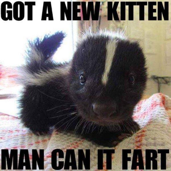Funny new kitten badger fart meme picture